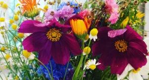 Read more about the article Samenbomben (Seed Bombs) –Blumen zum auswerfen